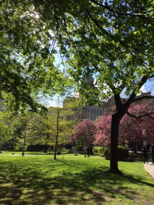 Osgoode Hall Blossoms 3