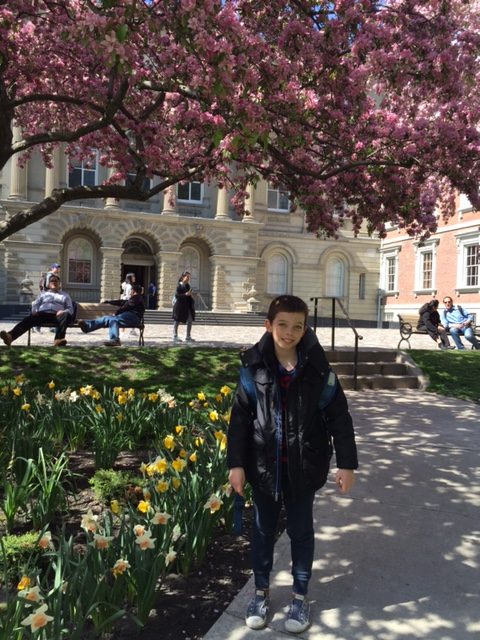 osgoode hall blossoms 5
