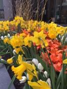 tulips toronto 2