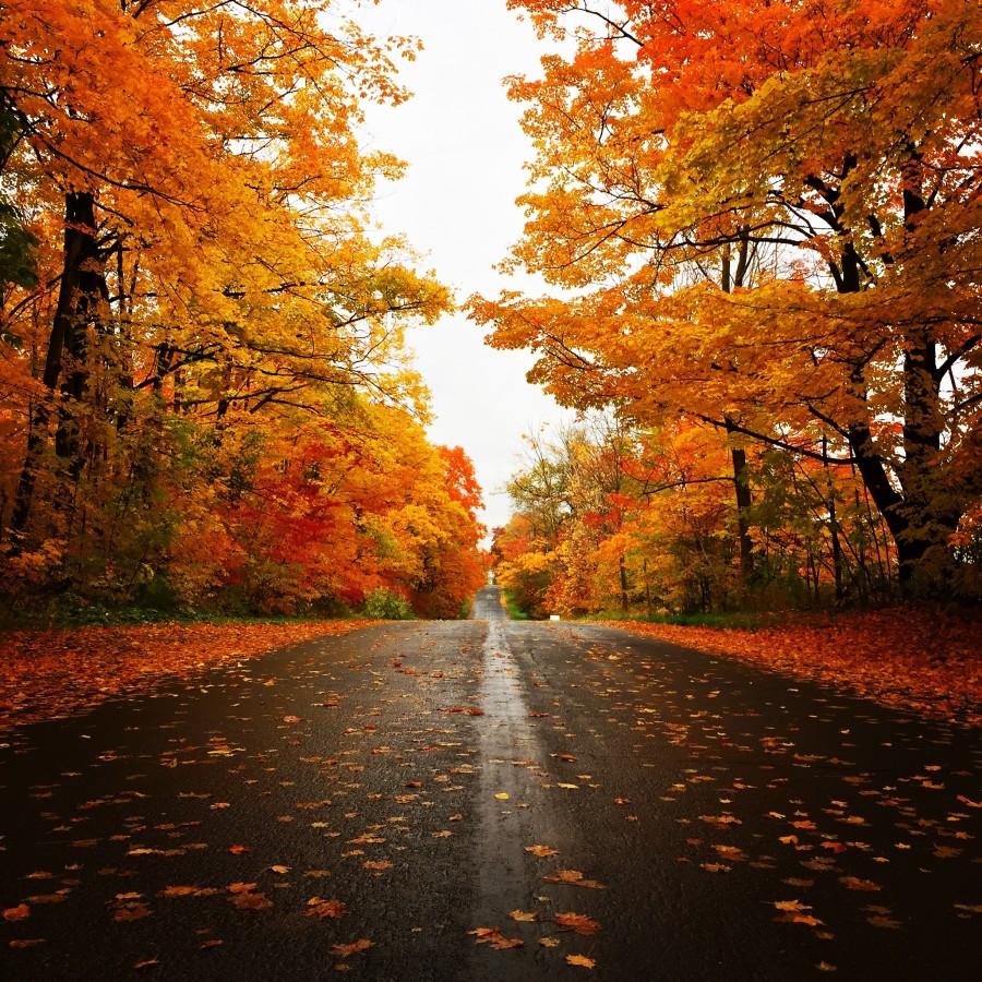 algonquin-provincial-park-fall
