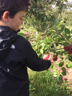 apple-picking-canada