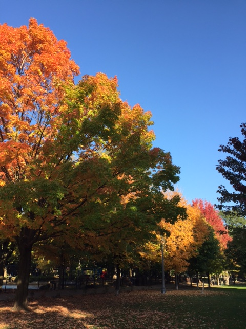fall-toronto-trees