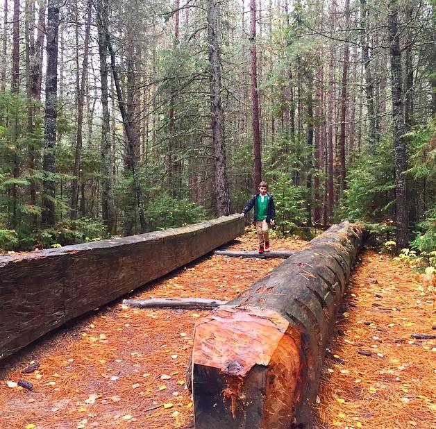 logging-museum-1