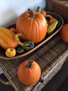 pumpkins-and-gourds