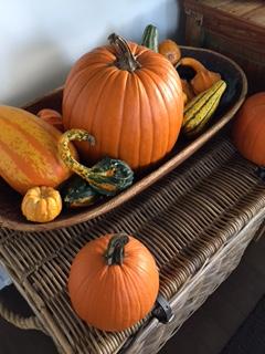 pumpkins-and-gourds